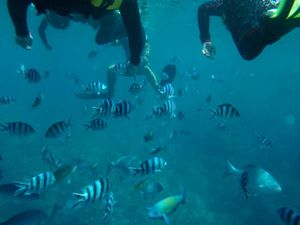 Under_sea_3
